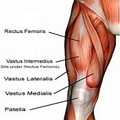 quadriceps-muscles-175x175